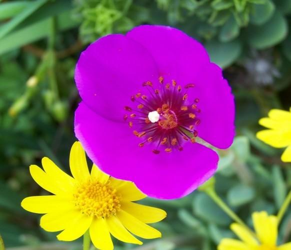 Fleurs_BG_05