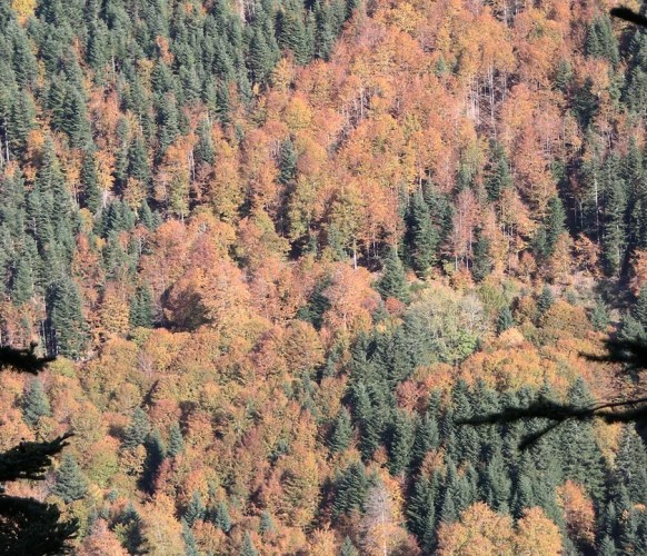 Paysage_automne_11