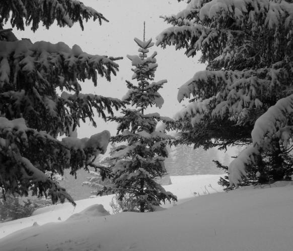 Paysage_hiver_BG_97