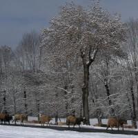 article_1 ere neige 2015_BG_04