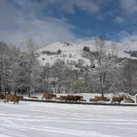 article_1 ere neige 2015_BG_06