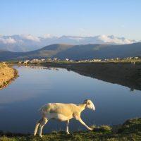 article_1607 Animaux des Pyrénées_BG_15