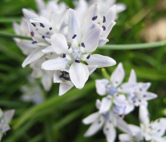 article_1607 Fleurs des Pyrénées_BG_12a