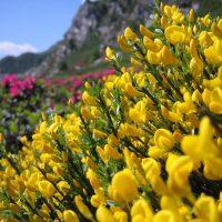 article_1607 Fleurs des Pyrénées_BG_20a