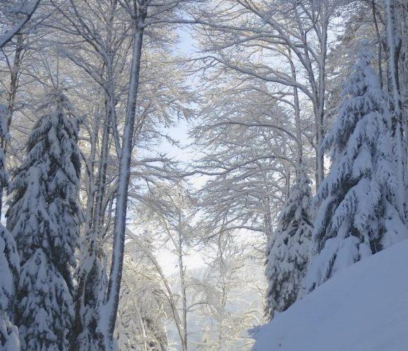 sortie-psy-hiver_02