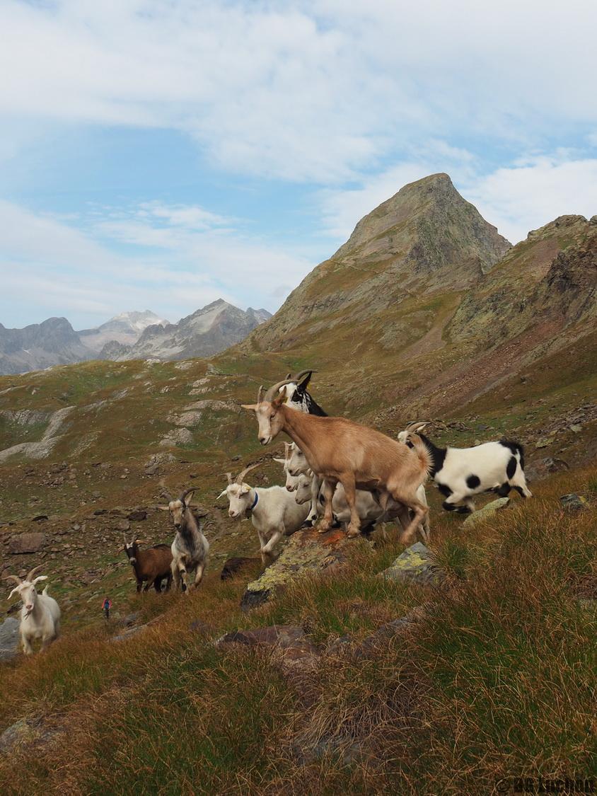 rencontres pyrenees