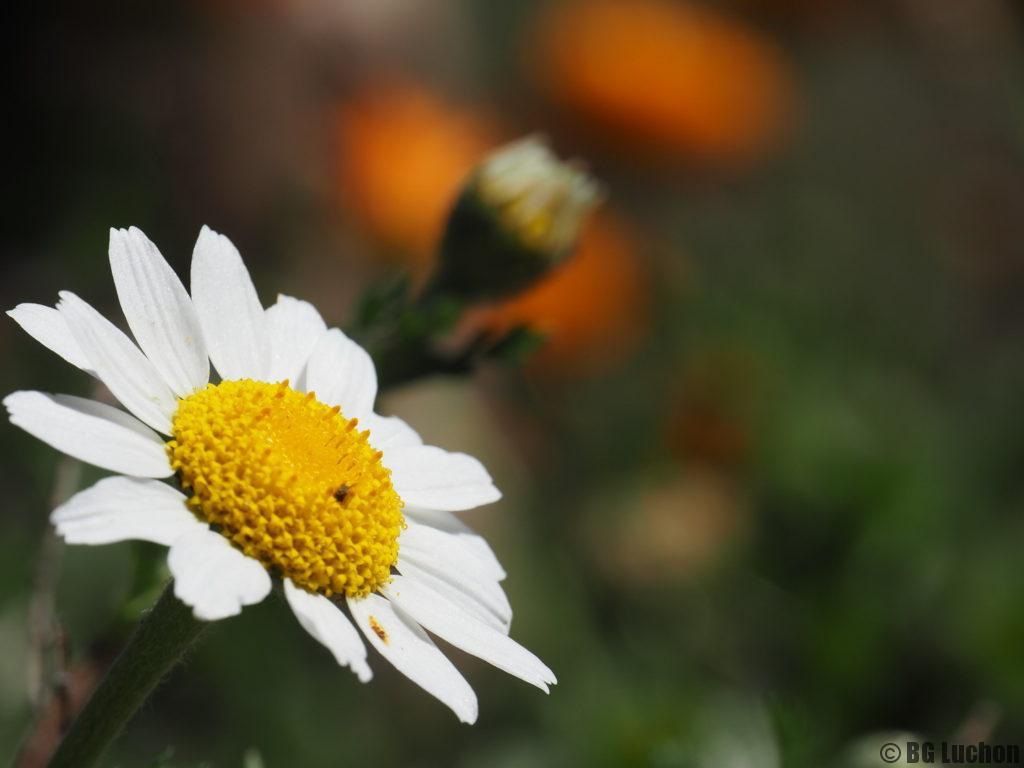Rando Demi Journée Botanique (sans voiture)