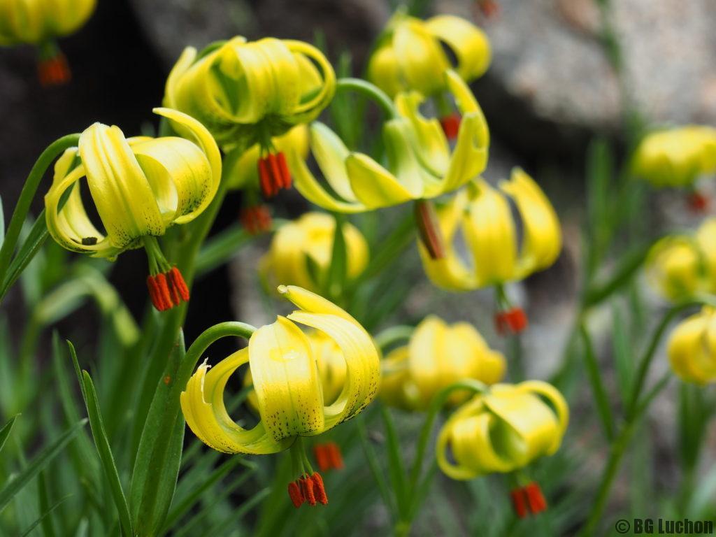 Rando Demi Journée Botanique